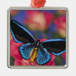Sammamish Washington Photograph of Butterfly 55 Christmas Ornament
