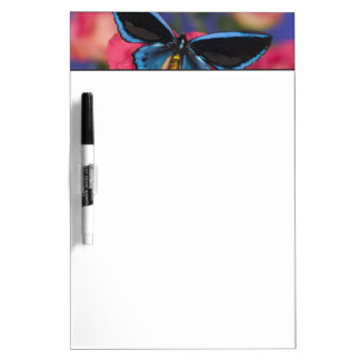 Sammamish Washington Photograph of Butterfly 55 Dry Erase Board