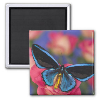 Sammamish Washington Photograph of Butterfly 55 Magnet