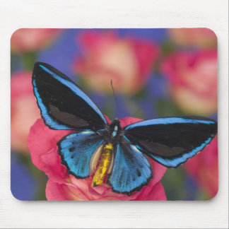 Sammamish Washington Photograph of Butterfly 55 Mouse Mat