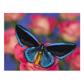 Sammamish Washington Photograph of Butterfly 55 Postcard