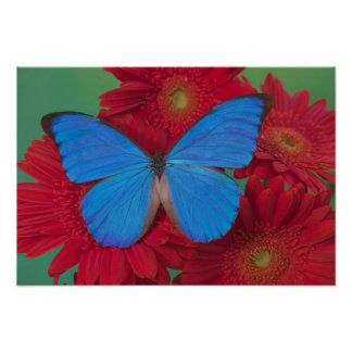 Sammamish Washington Photograph of Butterfly 55 Poster