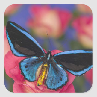 Sammamish Washington Photograph of Butterfly 55 Square Sticker