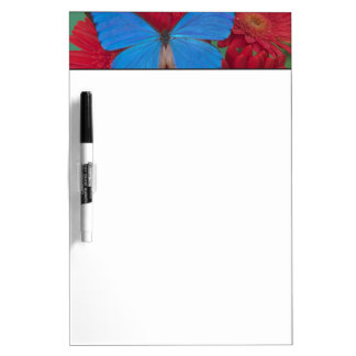 Sammamish Washington Photograph of Butterfly 56 Dry Erase Board