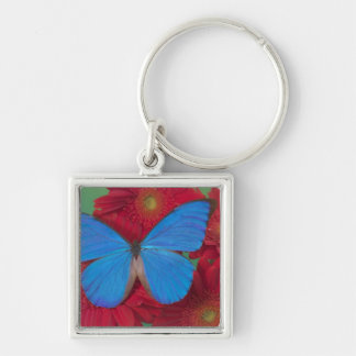 Sammamish Washington Photograph of Butterfly 56 Key Ring