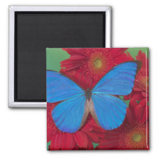 Sammamish Washington Photograph of Butterfly 56 Magnet