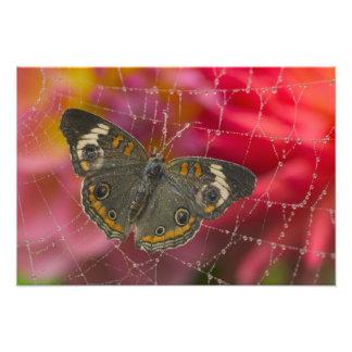 Sammamish Washington Photograph of Butterfly 57