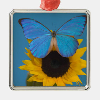 Sammamish Washington Photograph of Butterfly 57 Christmas Ornament