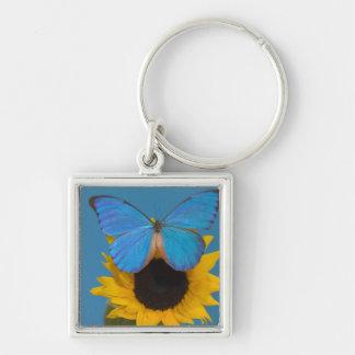 Sammamish Washington Photograph of Butterfly 57 Key Ring