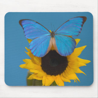 Sammamish Washington Photograph of Butterfly 57 Mouse Mat