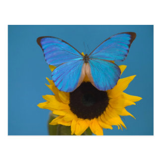 Sammamish Washington Photograph of Butterfly 57 Postcard