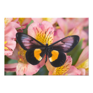 Sammamish Washington Photograph of Butterfly 58