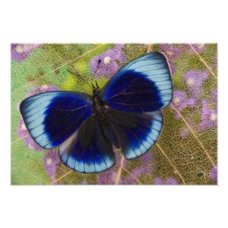 Sammamish Washington Photograph of Butterfly 58