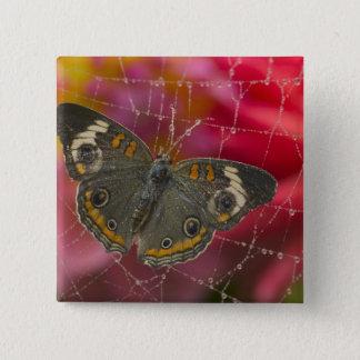 Sammamish Washington Photograph of Butterfly 58 15 Cm Square Badge