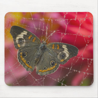 Sammamish Washington Photograph of Butterfly 58 Mouse Mat