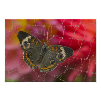 Sammamish Washington Photograph of Butterfly 58 Poster
