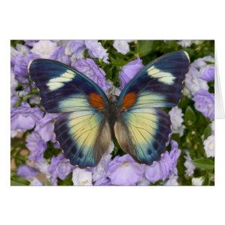 Sammamish Washington Photograph of Butterfly 5 Card