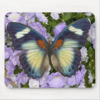 Sammamish Washington Photograph of Butterfly 5 Mouse Mat