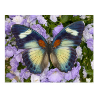 Sammamish Washington Photograph of Butterfly 5 Postcard