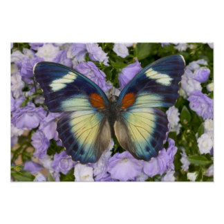 Sammamish Washington Photograph of Butterfly 5 Poster
