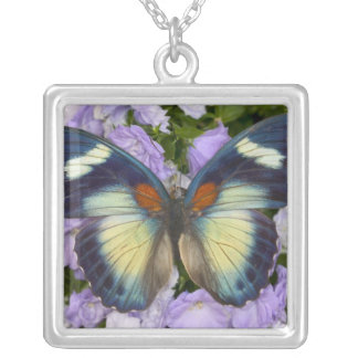 Sammamish Washington Photograph of Butterfly 5 Silver Plated Necklace