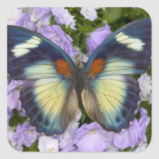 Sammamish Washington Photograph of Butterfly 5 Square Sticker