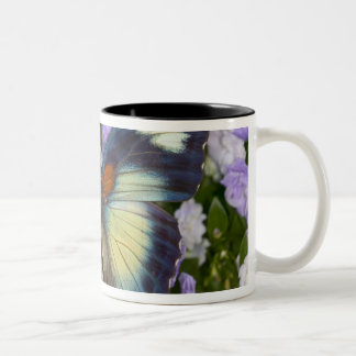 Sammamish Washington Photograph of Butterfly 5 Two-Tone Coffee Mug