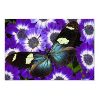 Sammamish Washington Photograph of Butterfly 6
