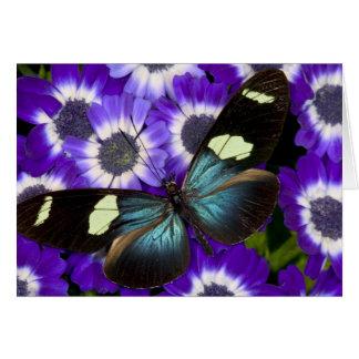 Sammamish Washington Photograph of Butterfly 6 Card