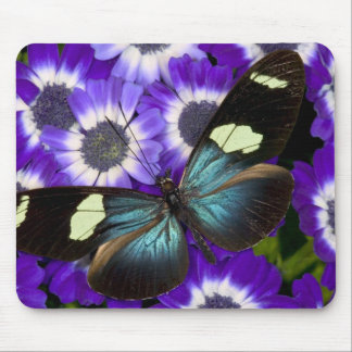 Sammamish Washington Photograph of Butterfly 6 Mouse Mat