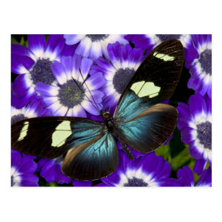 Sammamish Washington Photograph of Butterfly 6 Postcard