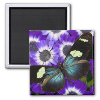 Sammamish Washington Photograph of Butterfly 6 Square Magnet