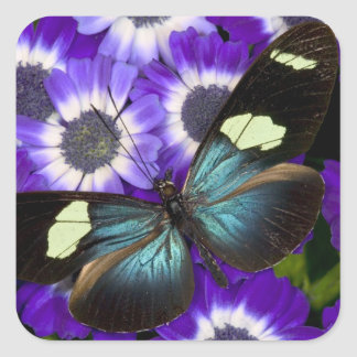 Sammamish Washington Photograph of Butterfly 6 Square Sticker