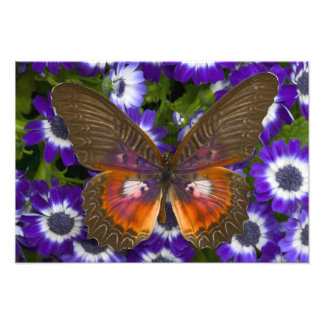Sammamish Washington Photograph of Butterfly 7