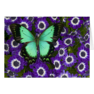 Sammamish Washington Photograph of Butterfly 7 Card