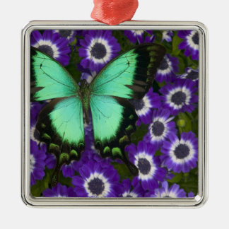 Sammamish Washington Photograph of Butterfly 7 Christmas Ornament