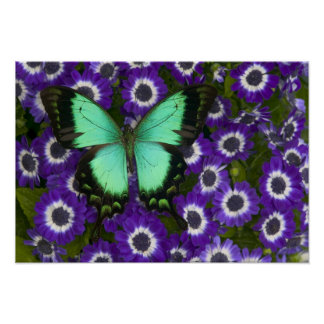 Sammamish Washington Photograph of Butterfly 7 Poster