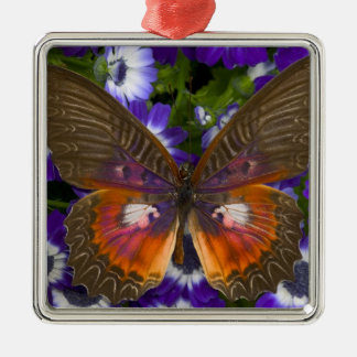 Sammamish Washington Photograph of Butterfly 8 Christmas Ornament