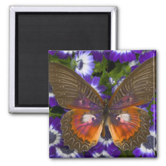 Sammamish Washington Photograph of Butterfly 8 Magnet