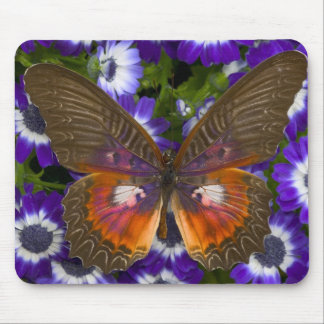 Sammamish Washington Photograph of Butterfly 8 Mouse Mat