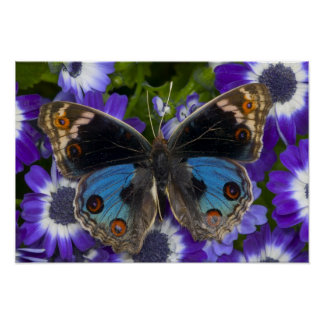 Sammamish Washington Photograph of Butterfly 8 Poster