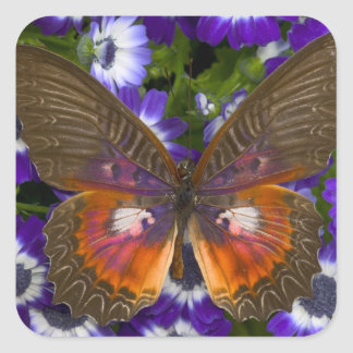 Sammamish Washington Photograph of Butterfly 8 Square Sticker