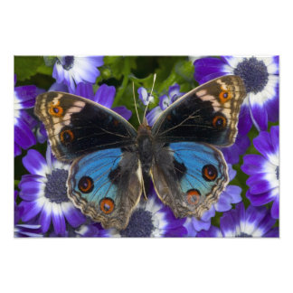 Sammamish Washington Photograph of Butterfly 9