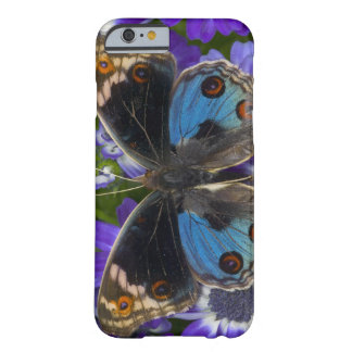 Sammamish Washington Photograph of Butterfly 9 Barely There iPhone 6 Case