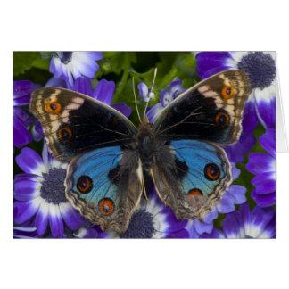 Sammamish Washington Photograph of Butterfly 9 Card