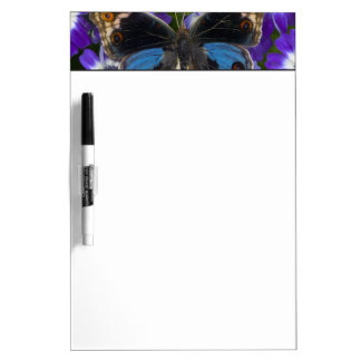 Sammamish Washington Photograph of Butterfly 9 Dry Erase Board