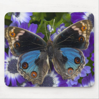 Sammamish Washington Photograph of Butterfly 9 Mouse Mat
