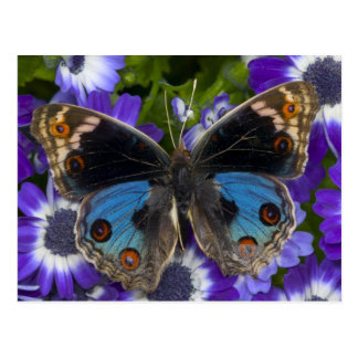 Sammamish Washington Photograph of Butterfly 9 Postcard