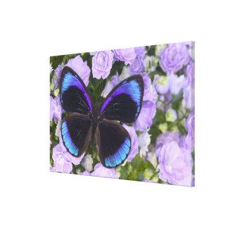 Sammamish Washington Photograph of Butterfly Canvas Print