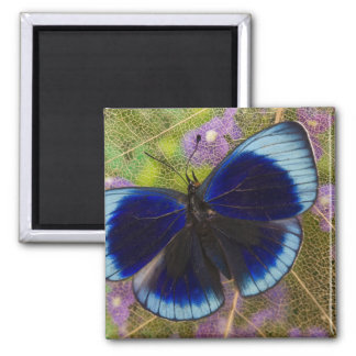 Sammamish Washington Photograph of Butterfly Magnet